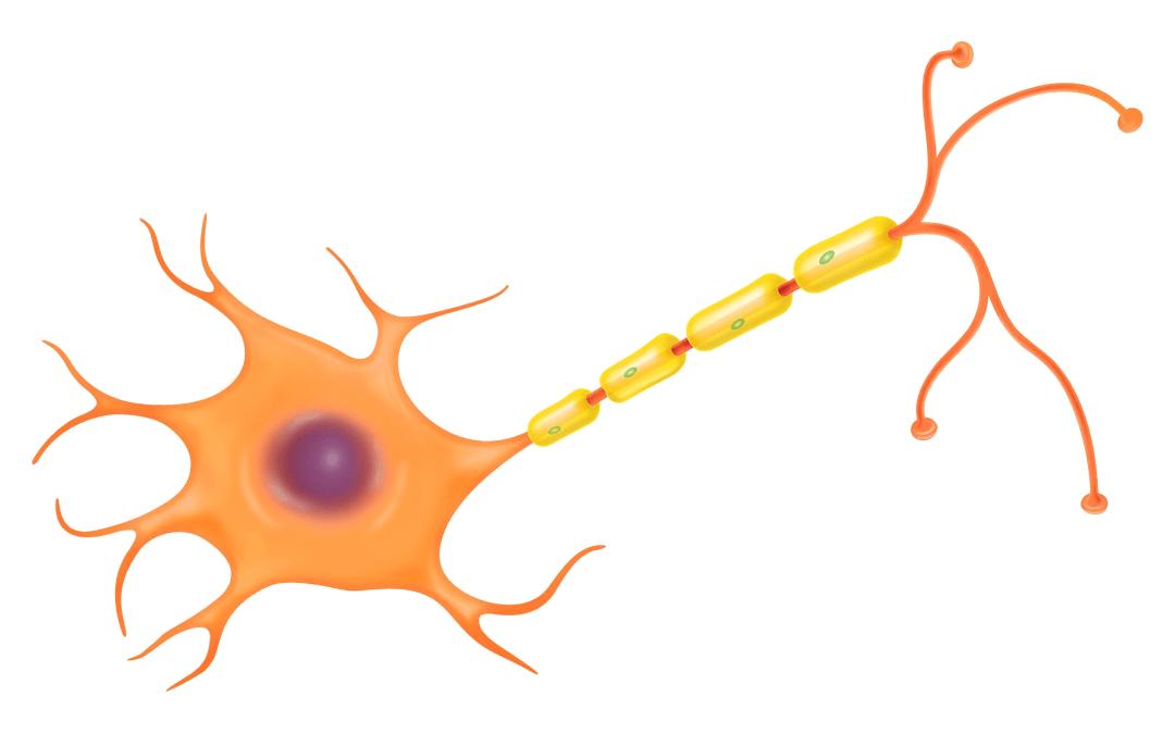 ALS Hastalığının Tedavisindeki Son Gelişmeler Nelerdir?